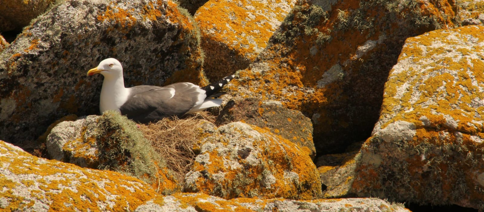 Isles of Scilly Seabird Conservation Strategy (2018-2023)