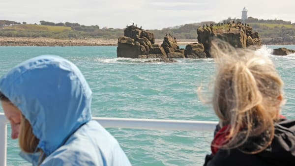 Wildlife Safari with St Agnes Boating