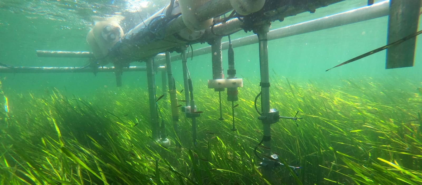Seagrass, Sediment and Saving Our Sandy Beaches