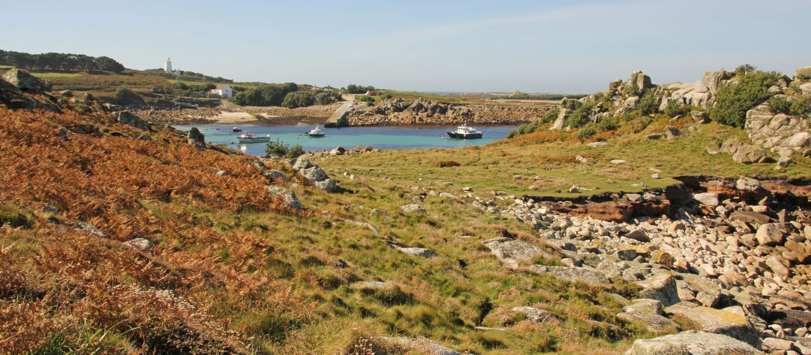 Statistics & SPA's: Scilly's Seabirds ~ A Round-Up of 2020