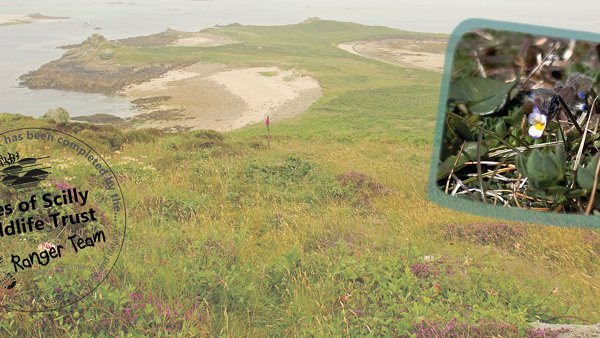 Isles of Scilly Wildlife Trust confirms return of rare species